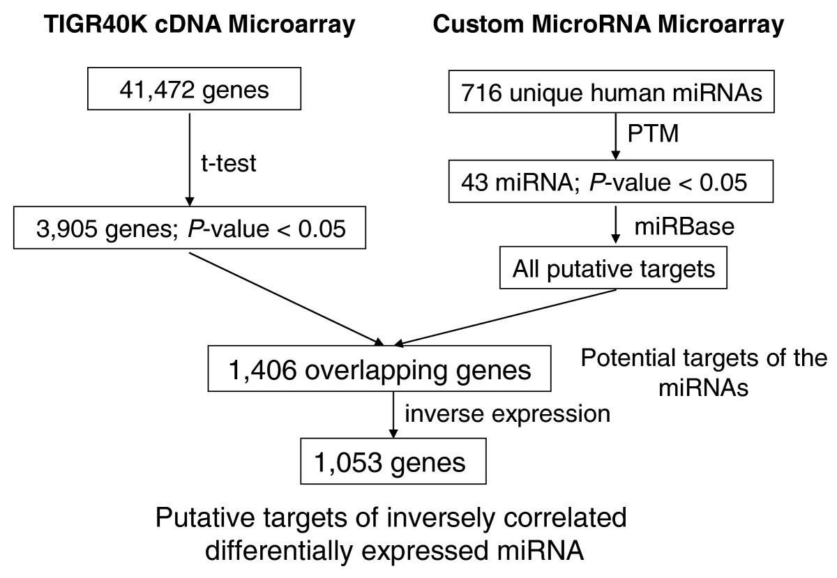 Investigation Of Post Transcriptional Gene Regulatory Networks
