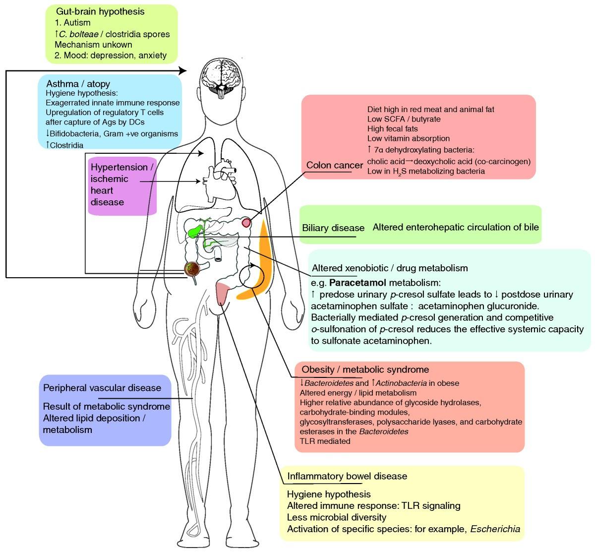 ebook Komplementäre Methodenlehre der klinischen Forschung: Cognition based