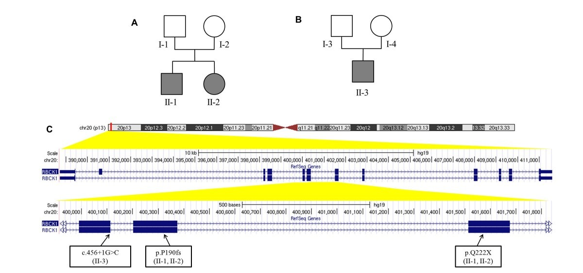 Whole Genome Sequencing Identifies New >> Whole Genome Dna Rna Sequencing Identifies Truncating Mutations In
