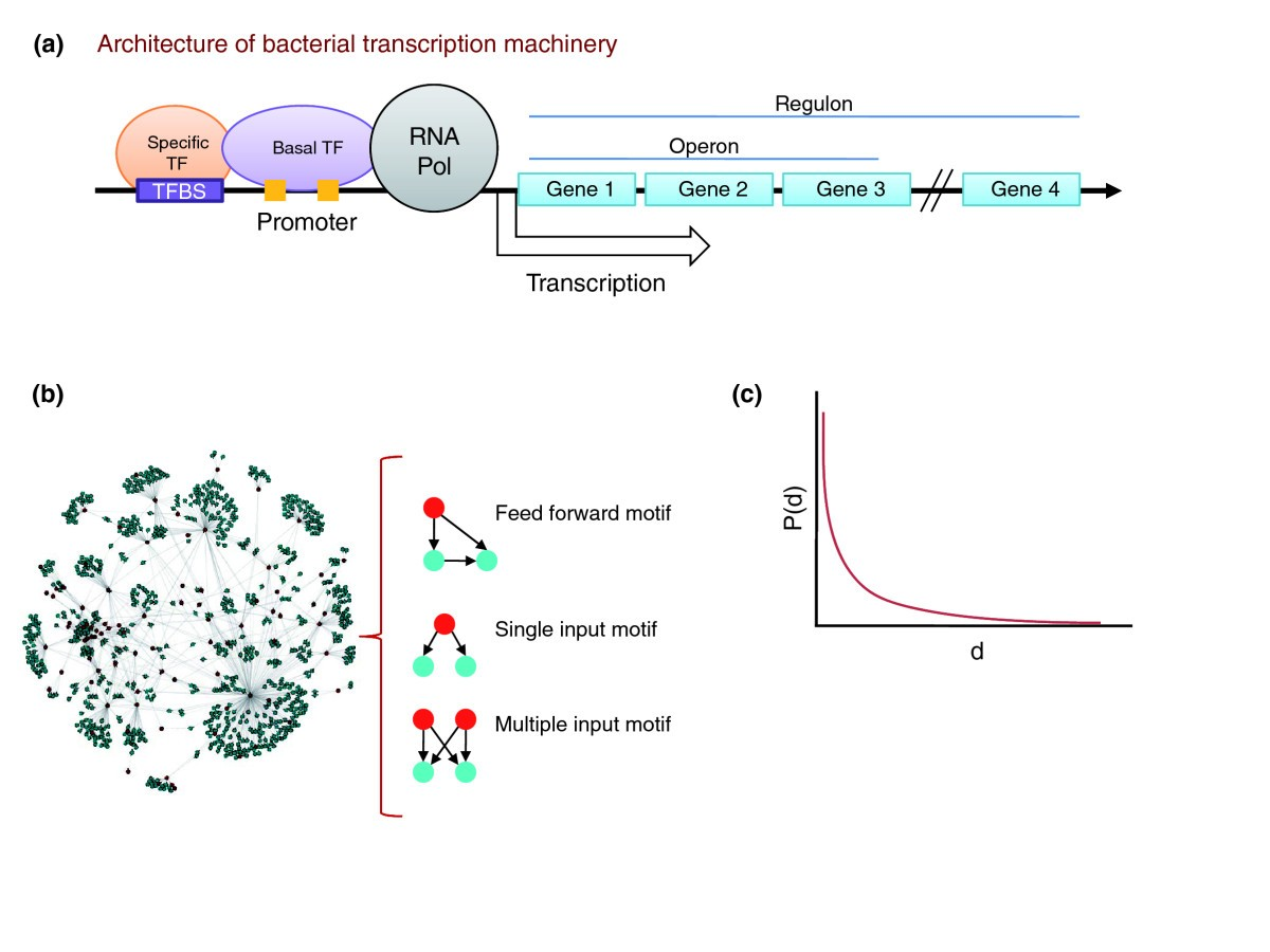 Reconstructing Prokaryotic Transcriptional Regulatory Networks Figure 1 Schematic Diagram Of A Cell