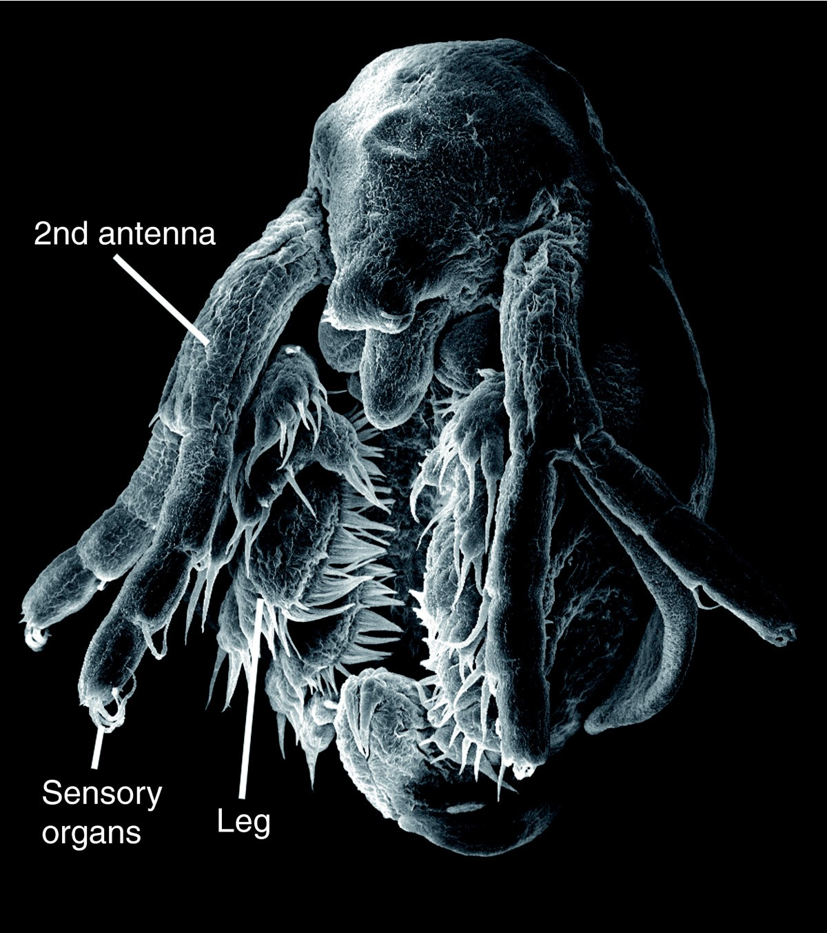 The Water Flea Daphnia A New Model System For Ecology And