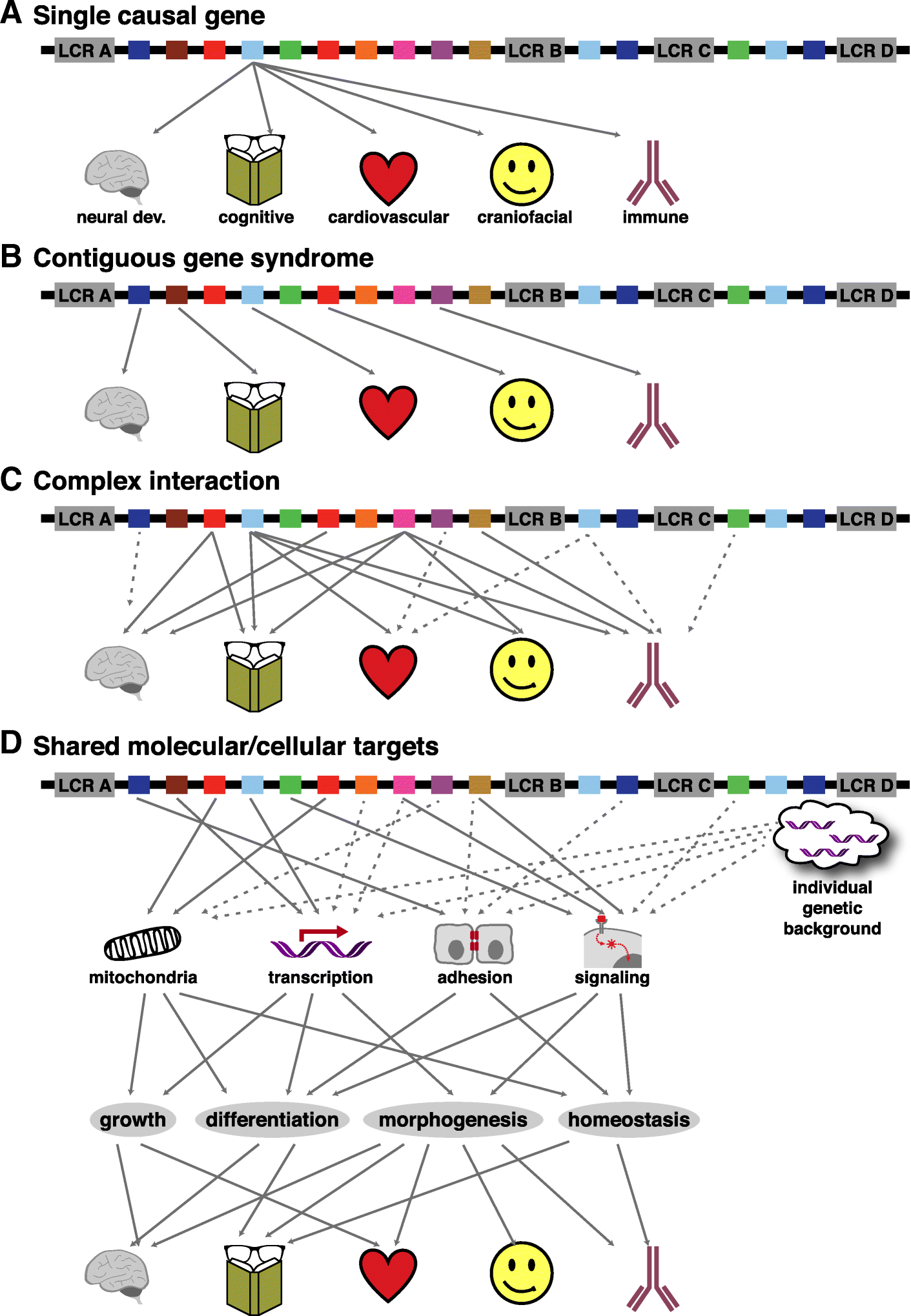 Genes Impact Suspect Cortex Areas More >> In The Line Up Deleted Genes Associated With Digeorge 22q11 2
