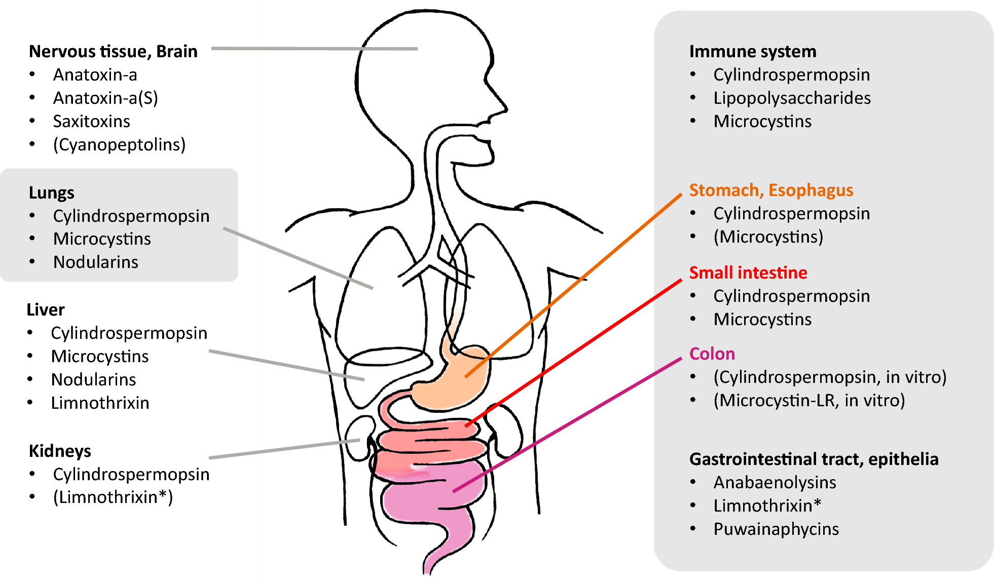 Immune System And Gastrointestinal >> Effects Of Cyanobacterial Toxins On The Human Gastrointestinal Tract