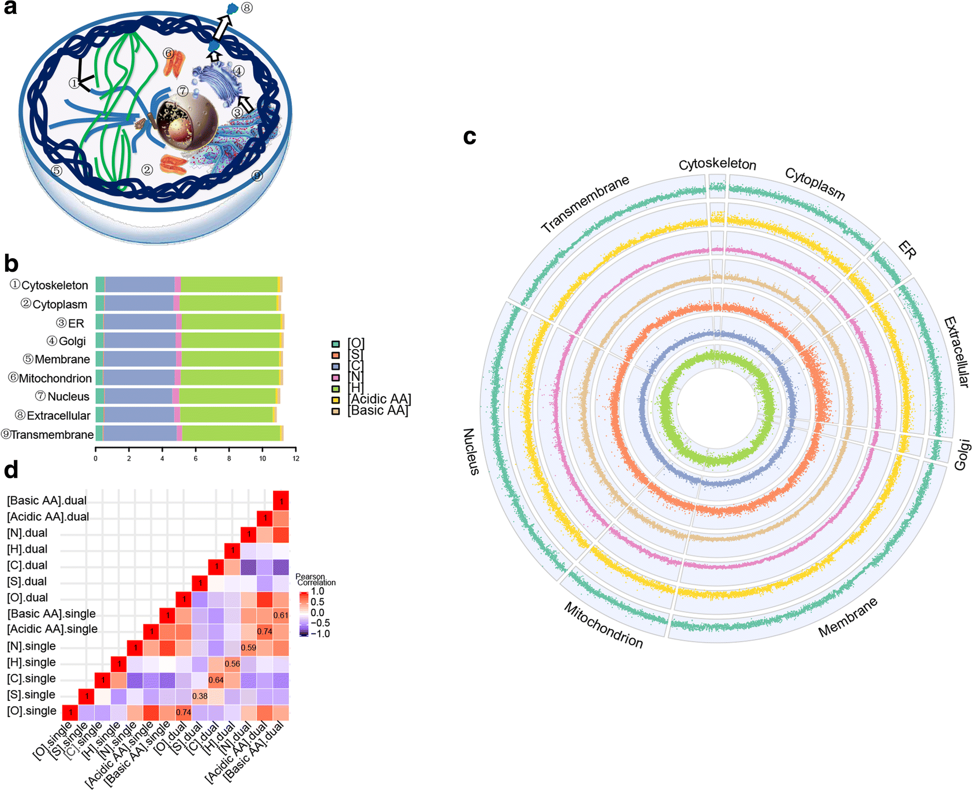 Subcellular Stoichiogenomics Reveal Cell Evolution And Electrostatic Eukaryotic Cells Are Generally Much Larger Than Prokaryotic Fig 1