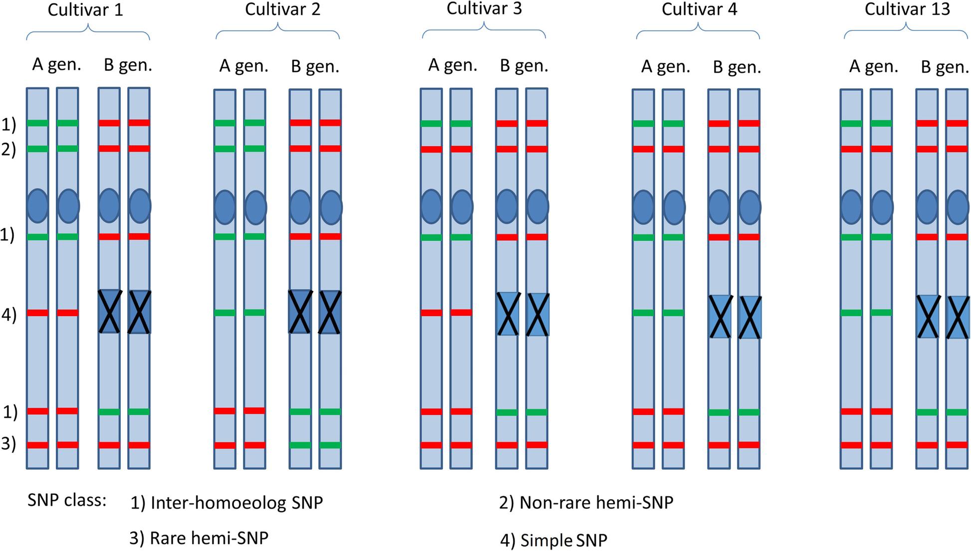 f06f673de671 Genomic tools for durum wheat breeding  de novo assembly of Svevo ...