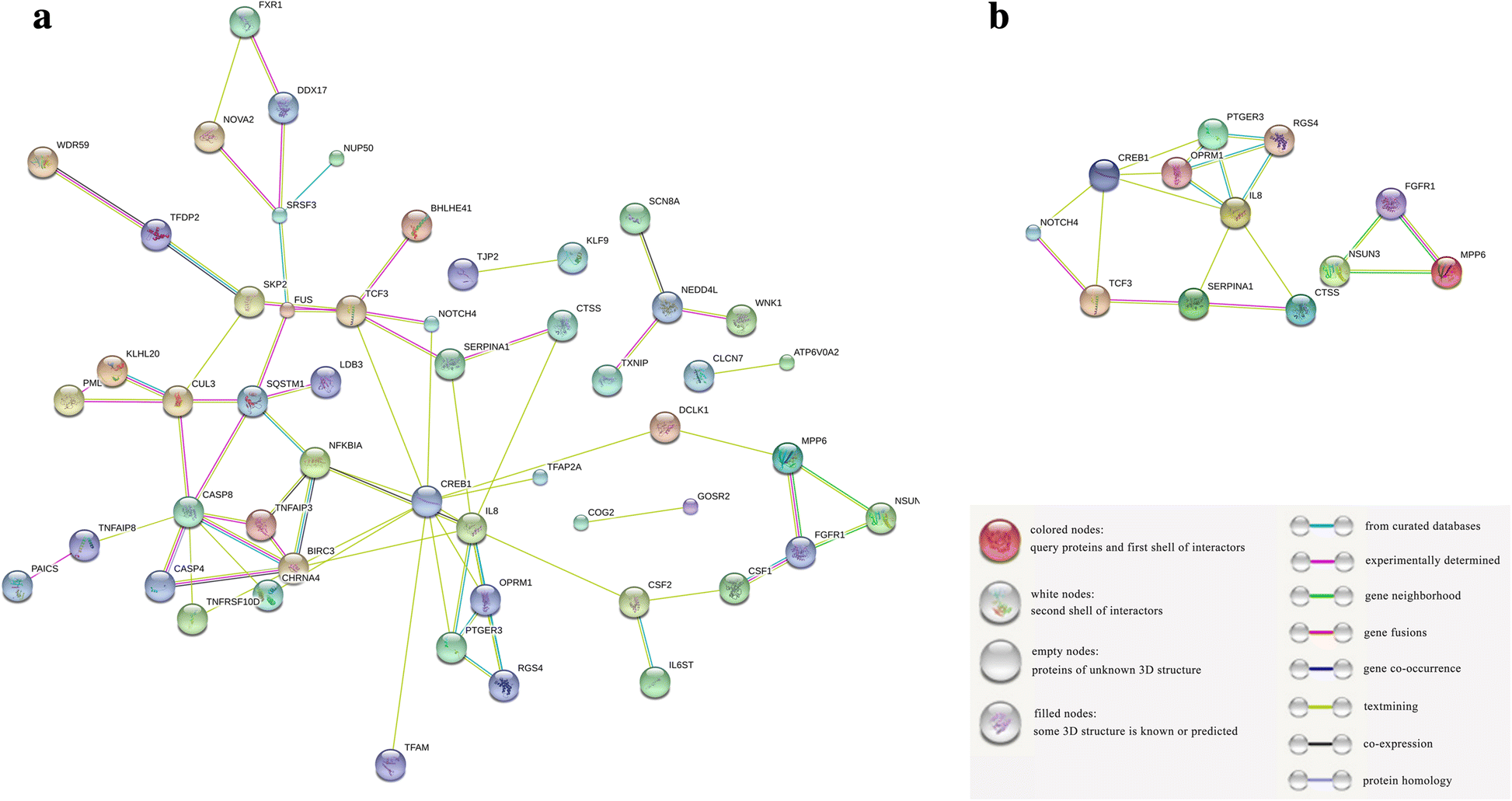 plant dcl proteins In addition to sirnas, antiviral rna silencing requires the participation of at least four families of plant proteins, namely the dicer‐like (dcl) nucleases that process virus‐specific double‐stranded (ds) rna to sirnas, argonaute proteins (ago) that use sirnas as the sequence‐specific guide to cleave (slice) complementary single.