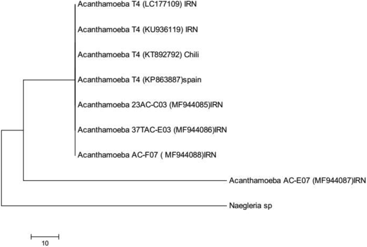Isolation and identification of Acanthamoeba from pond water of ...