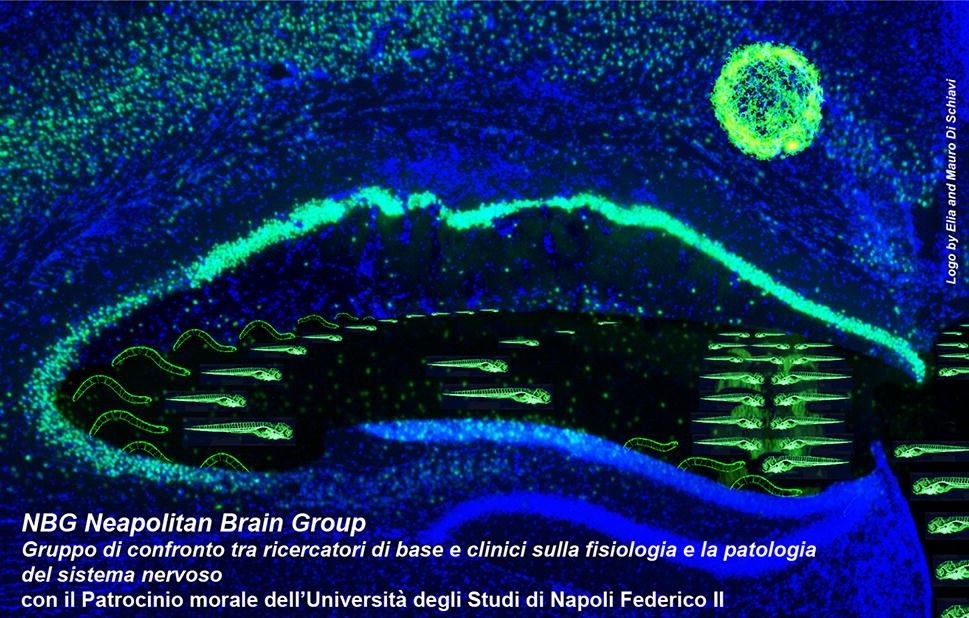 The Neapolitan Brain Group (NBG) is a discussion group including basic and  clinical researchers of the Campania area (and 949b90563ddd
