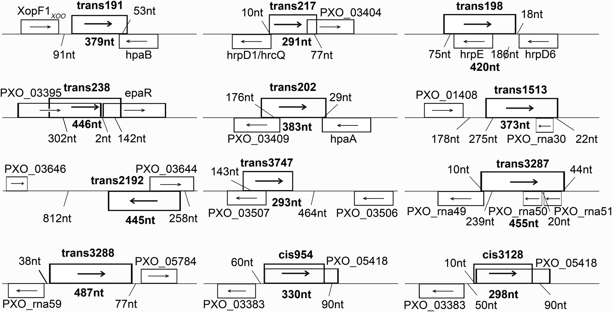 Two virulent sRNAs identified by genomic sequencing tar the type