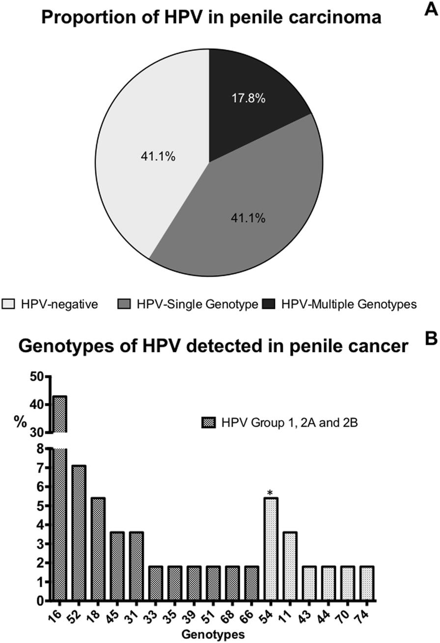 Hpv virus negatif - Human papilloma virus negatif