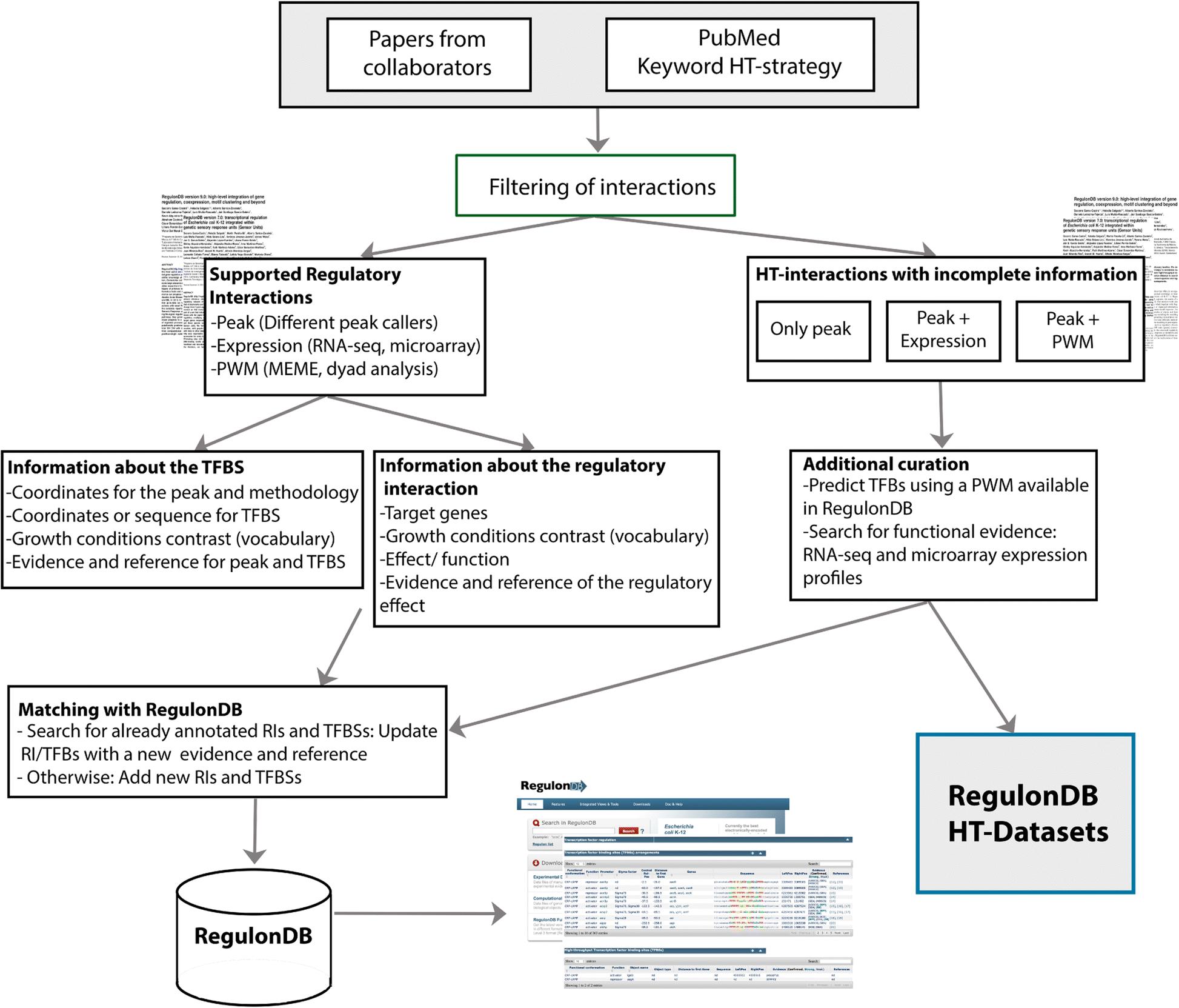 A Unified Resource For Transcriptional Regulation In Escherichia 4 Way Switch Grainger Fig 2