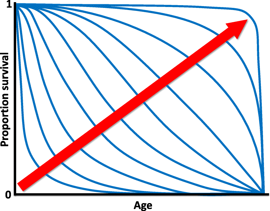 Horizons In The Evolution Of Aging