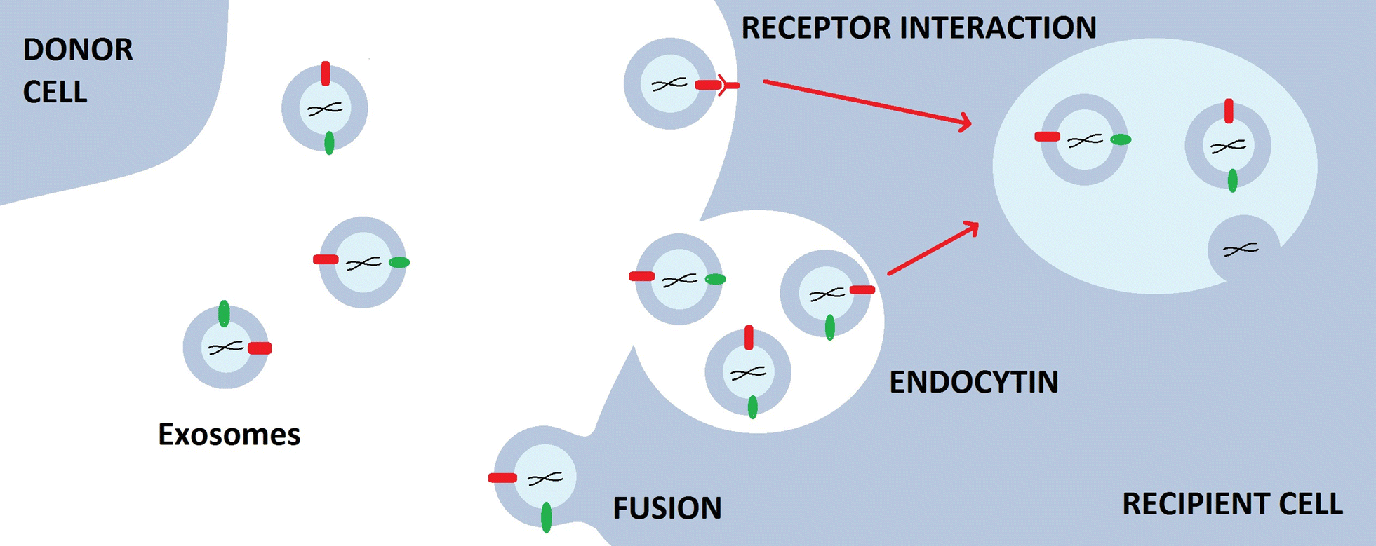 Recent Advancements In The Use Of Exosomes As Drug Delivery Systems 2009 Saab 9 3 Fuse Diagram Fig 2