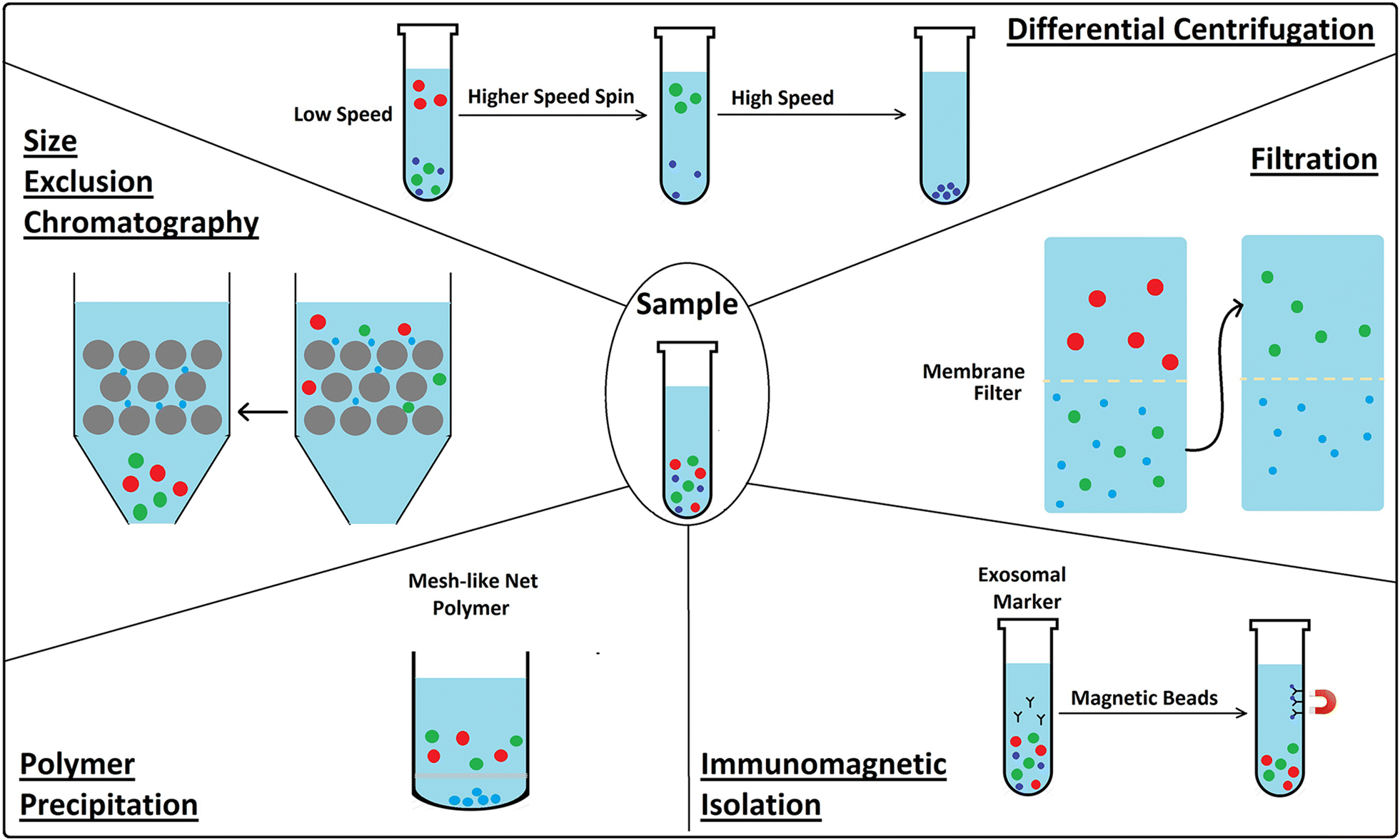 Recent Advancements In The Use Of Exosomes As Drug Delivery Systems 2009 Saab 9 3 Fuse Diagram Schematic Exosome Isolation