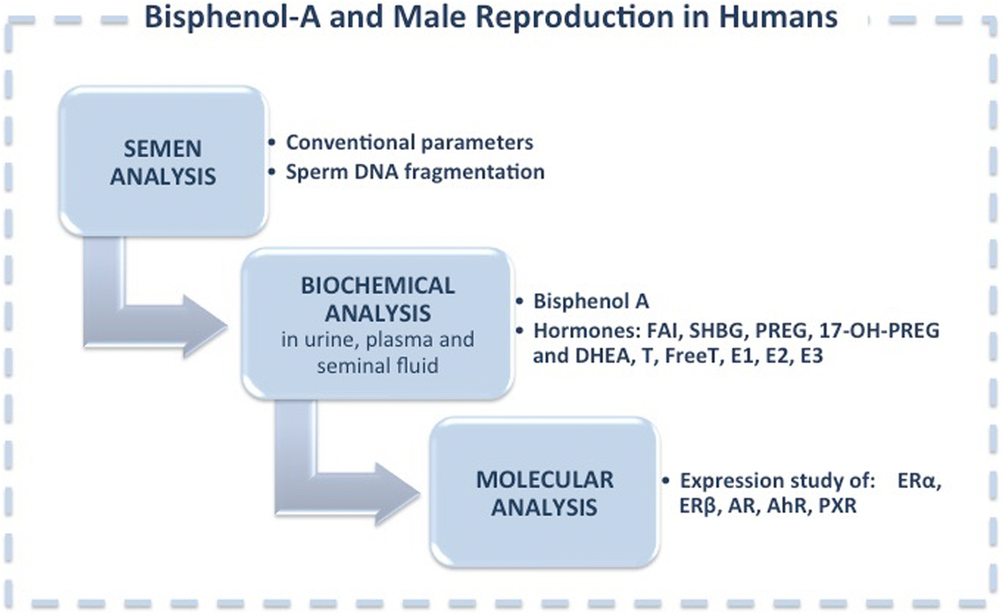 Bisphenol A An Emerging Threat To Male Fertility Reproductive