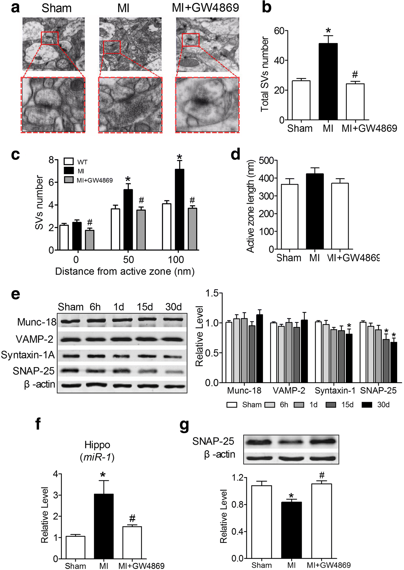 Overexpression Of Mir 1 In The Heart Attenuates Hippocampal Synaptic Cat 303 5c Wiring Diagram Fig 8