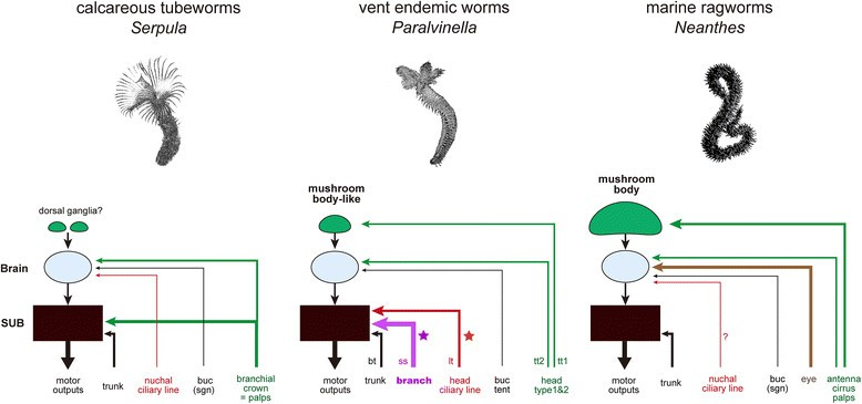 Sensing Deep Extreme Environments The Receptor Cell Types Brain