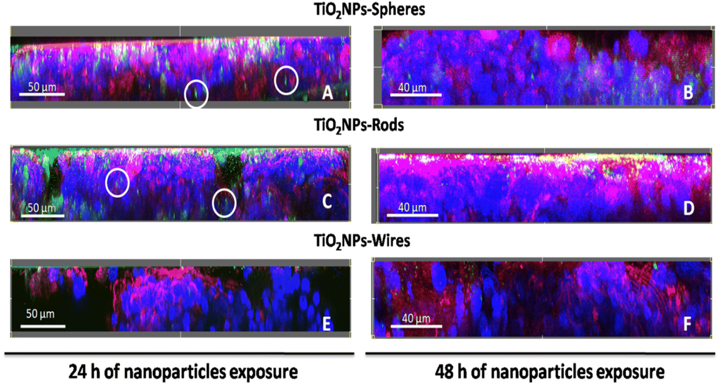 Effects Of Differently Shaped Tio2nps Nanospheres Nanorods And Pettibone Wire Diagram Fig 6