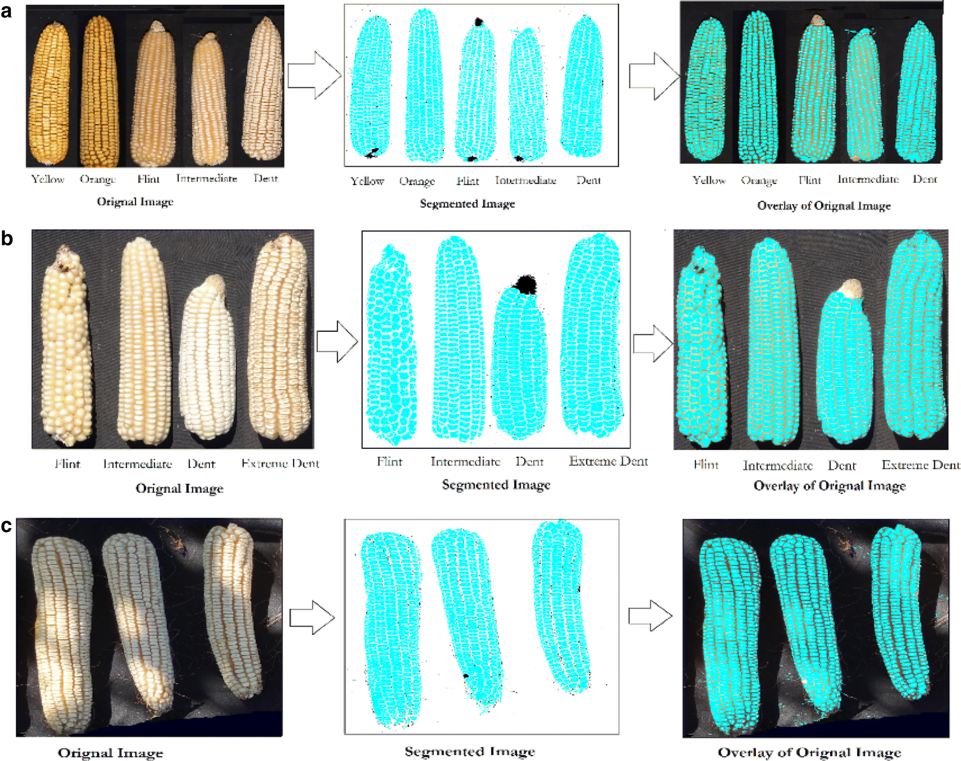 High-throughput method for ear phenotyping and kernel weight ...