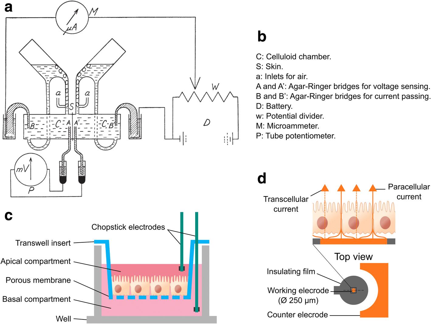 engineering and monitoring cellular barrier models journal of rh jbioleng biomedcentral com
