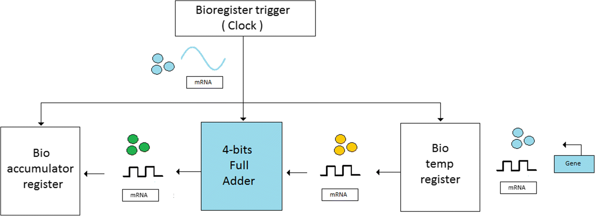 Synthesis Of Control Unit For Future Biocomputer Journal Block Diagram Composition The Full Adder B Top Level Fig 6 Bio Alu Schematic