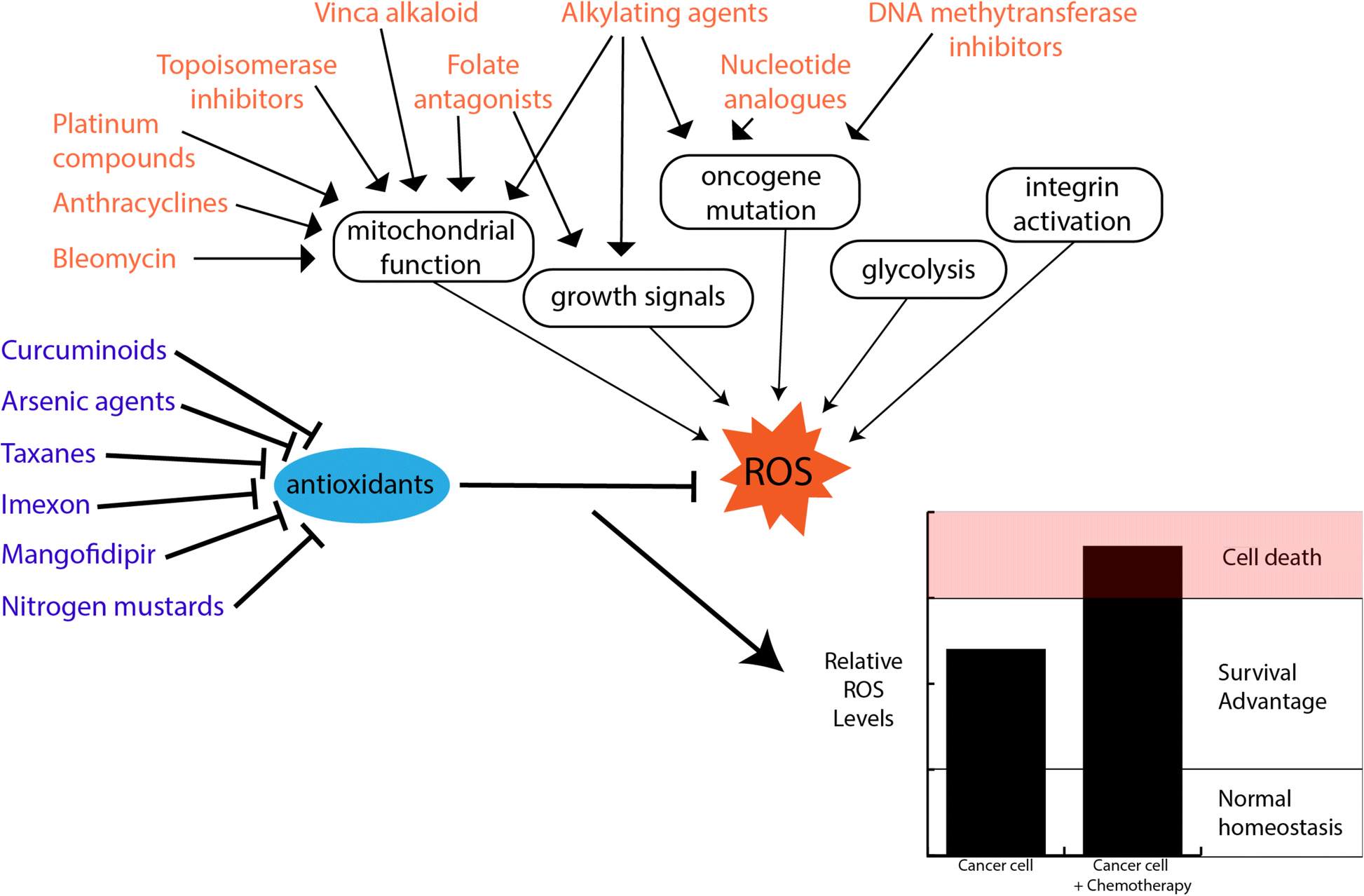 The Role Of Cellular Reactive Oxygen Species In Cancer Chemotherapy