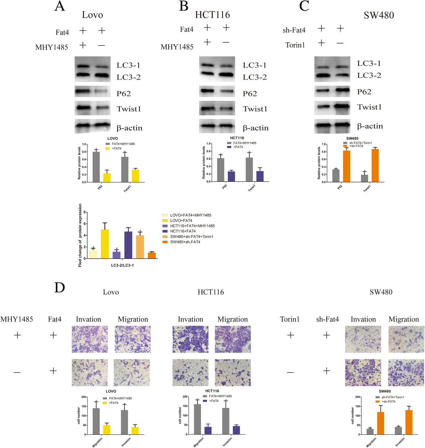 Fat4 Regulates The Emt And Autophagy In Colorectal Cancer Cells In Part Via The Pi3k Akt Signaling Axis Journal Of Experimental Clinical Cancer Research Full Text