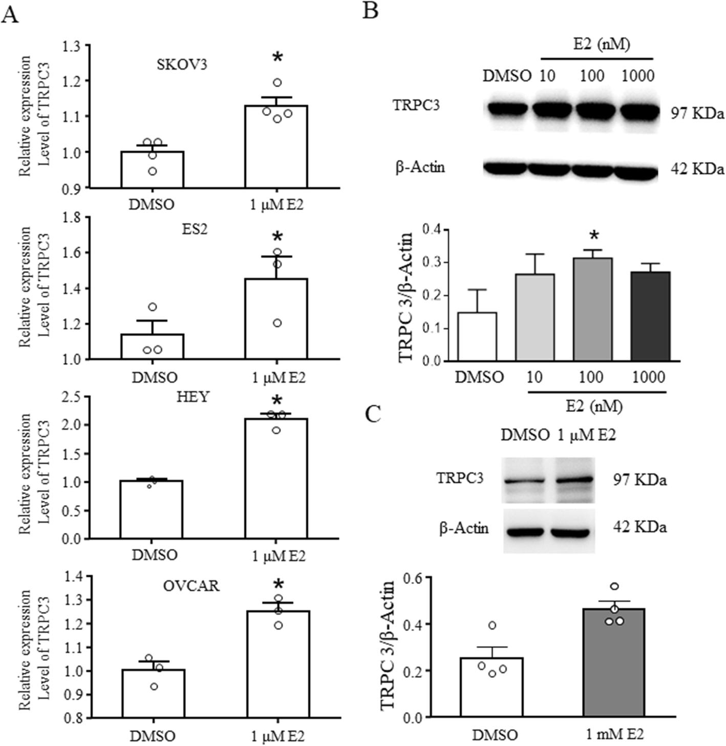 Figure 4 Estrogen Enhances The Proliferation And Migration Of Ovarian Cancer Cells By Activating Transient Receptor Potential Channel C3 Springerlink