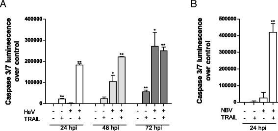 Proteomics informed by transcriptomics reveals hendra virus figure 9 ccuart Images