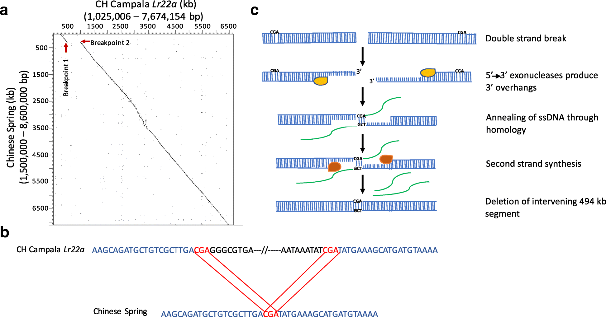 Chromosome scale comparative sequence analysis unravels molecular fig 2 fandeluxe Gallery