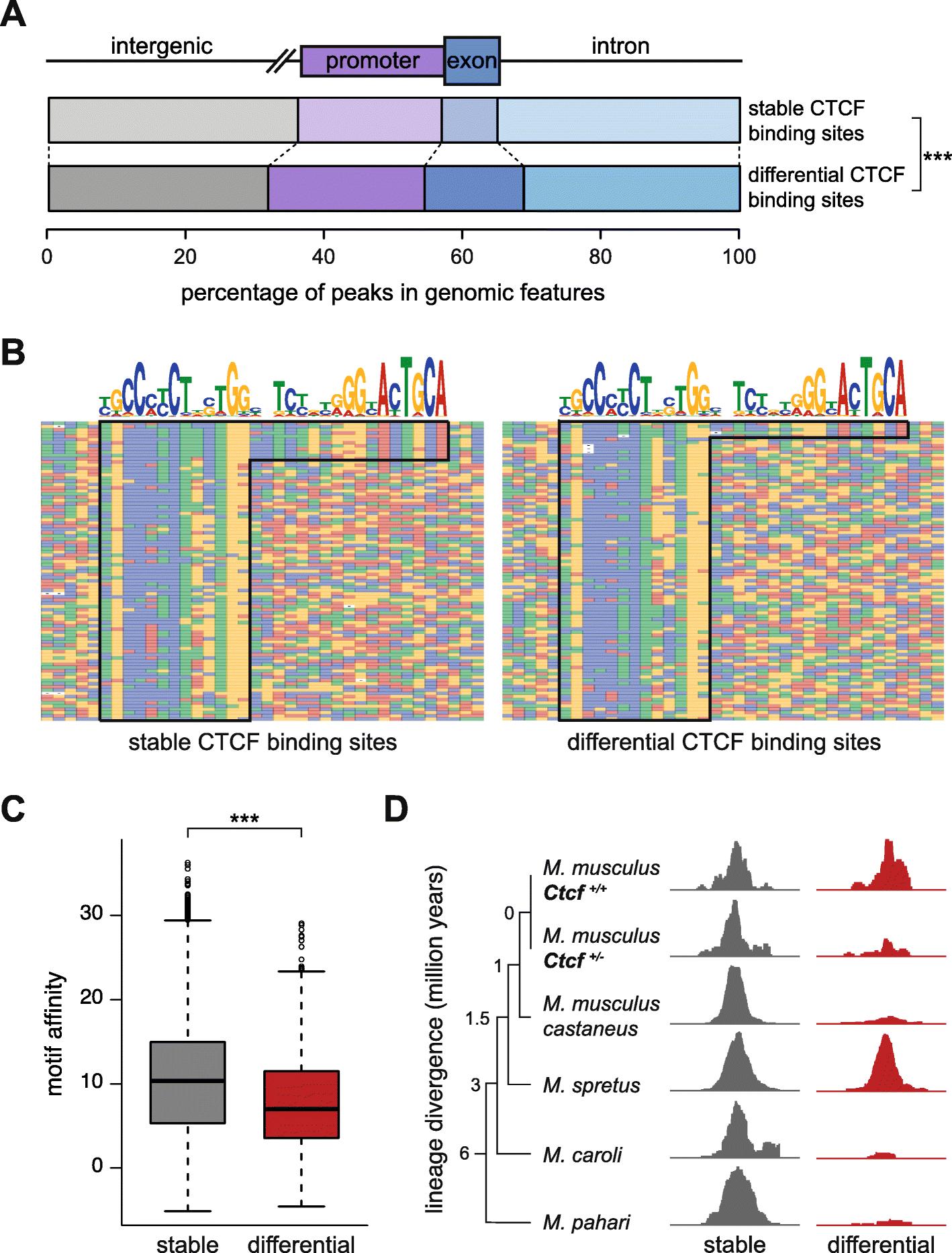 Ctcf Maintains Regulatory Homeostasis Of Cancer Pathways Genome Engine Diagram Additionally 2006 07 Honda Odyssey Left Driver Side Fig 3
