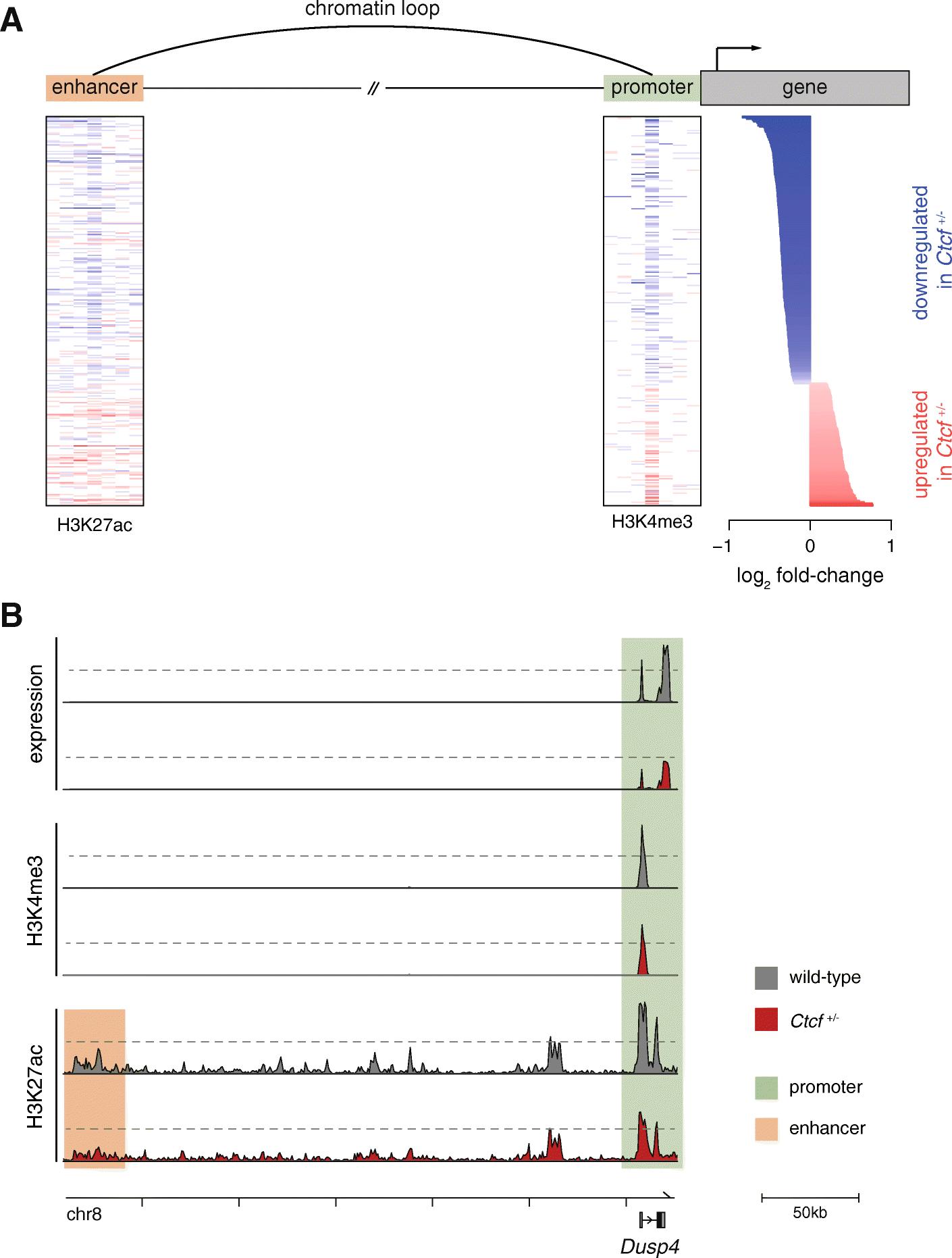 Ctcf Maintains Regulatory Homeostasis Of Cancer Pathways Genome Engine Diagram Additionally 2006 07 Honda Odyssey Left Driver Side Fig 5