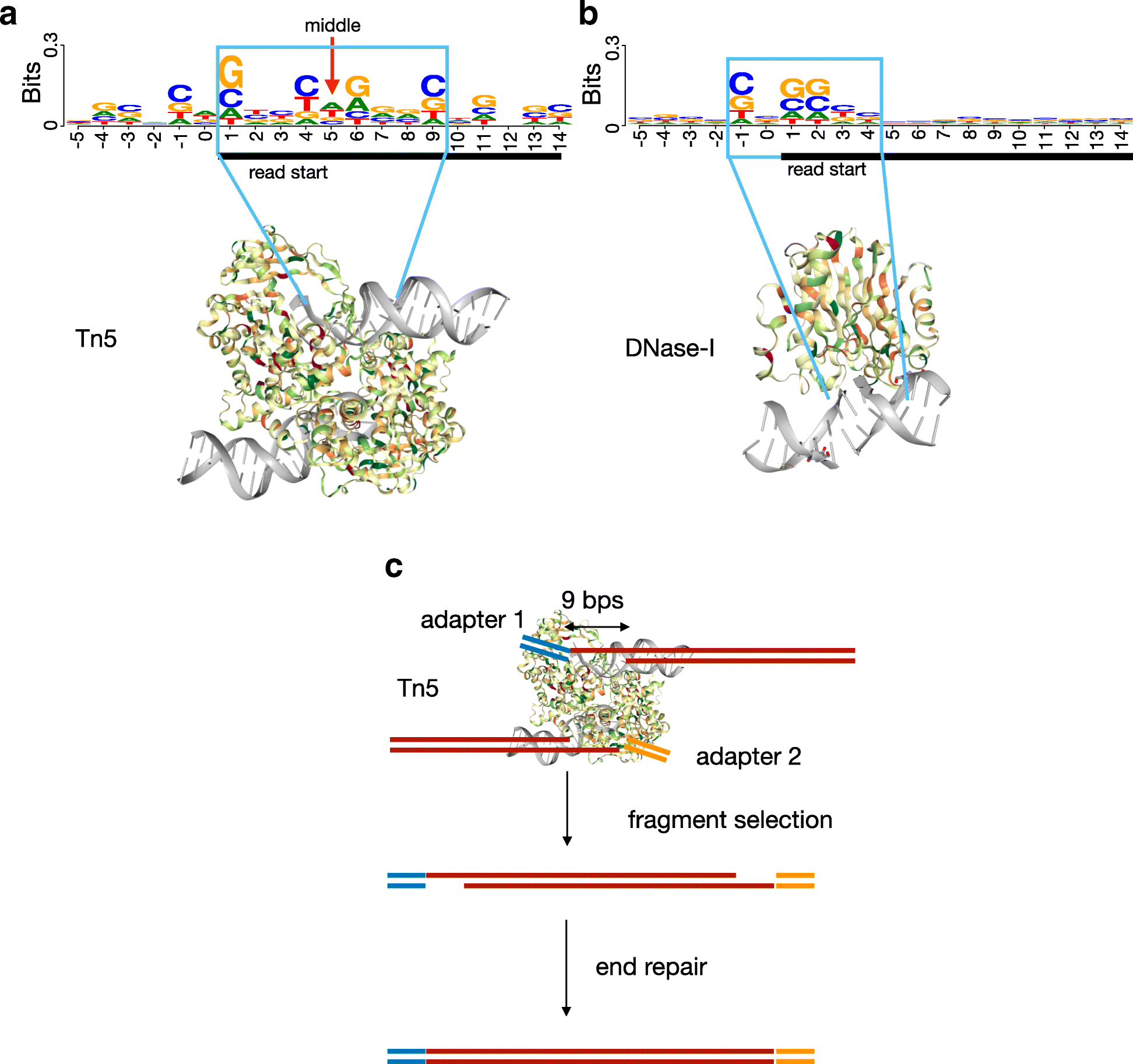 Identification Of Transcription Factor Binding Sites Using