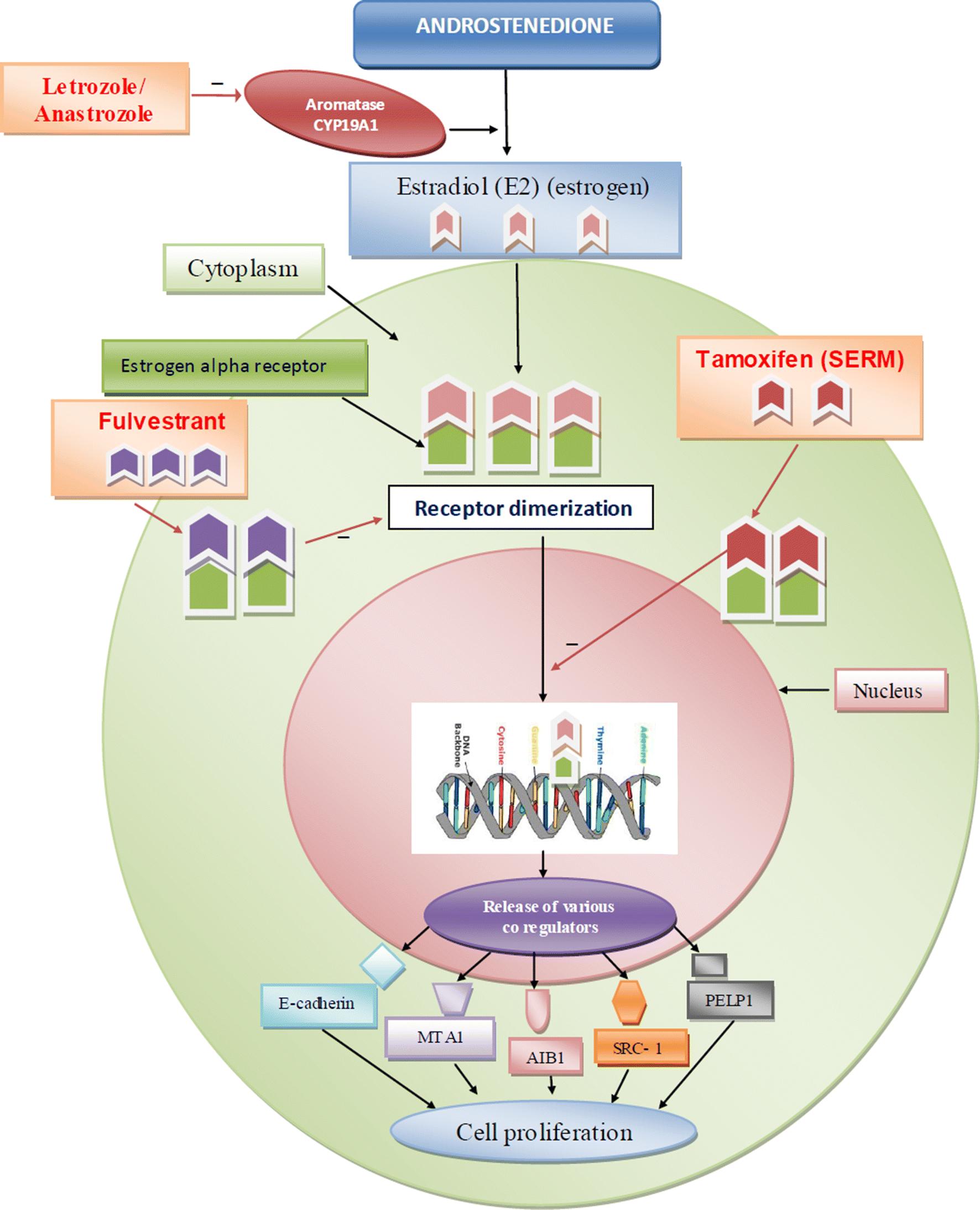 Estrogen Alpha Receptor Antagonists For The Treatment Of