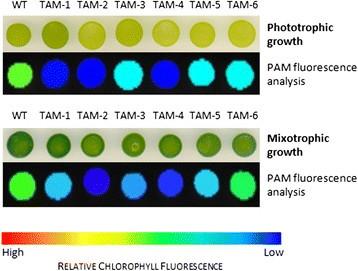 domestication of the green alga chlorella sorokiniana reduction of4 Little Known Landing Page Optimization Boosters Unamo Blog 347250 #7