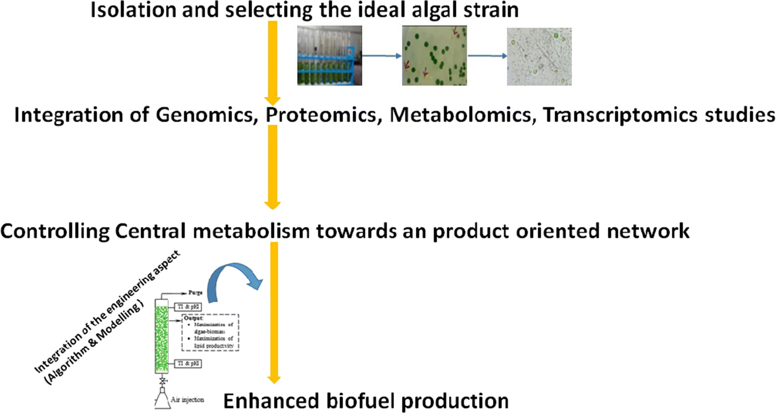 Recent Developments In Synthetic Biology And Metabolic Engineering 122 Electronic Circuit Construction Techniques Review Of Some This Also Examines The Role Played By Microalgae As Biorefineries Microalgal Culture Conditions Various Operating Parameters That Need To Be
