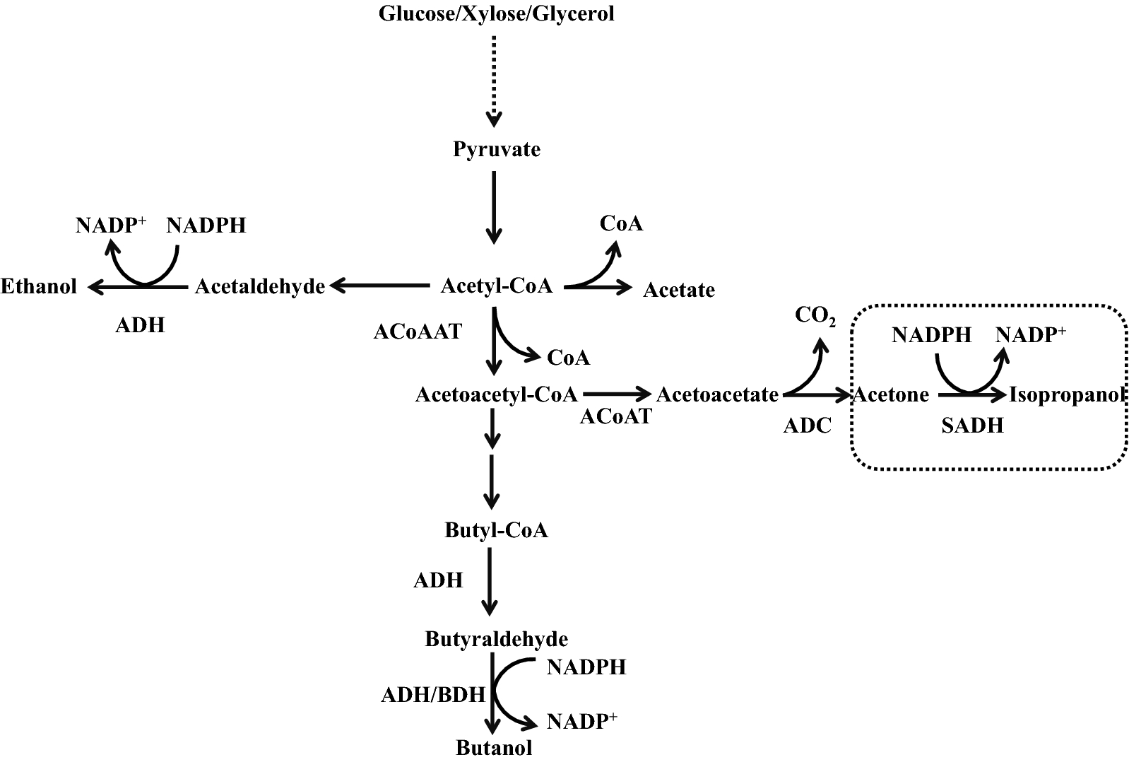 N Butanol Process Flow Diagram Wiring Libraries Html Libraryexploitation Of Novel Wild Type Solventogenic Strains For Fig