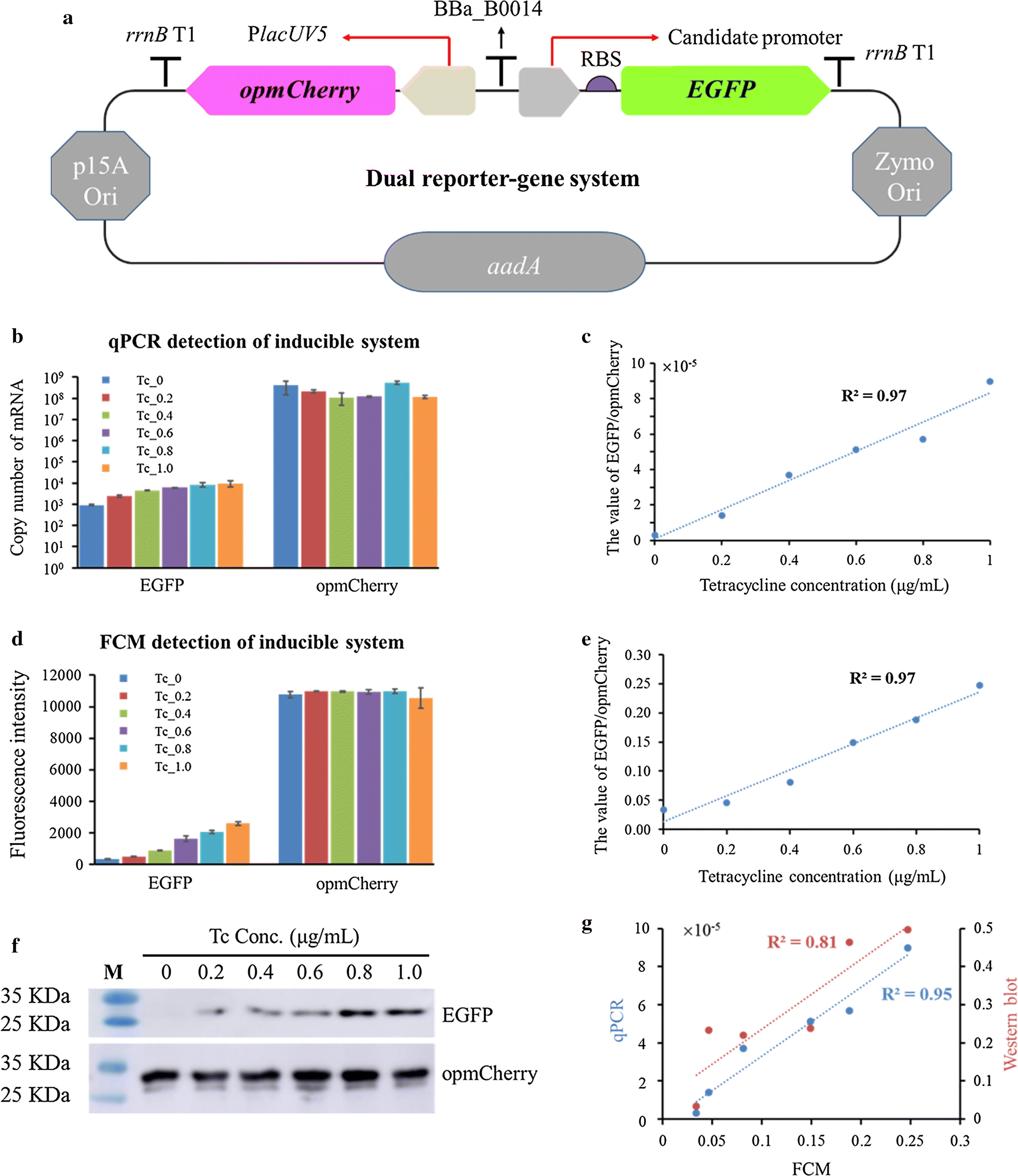 Prediction and characterization of promoters and ribosomal binding