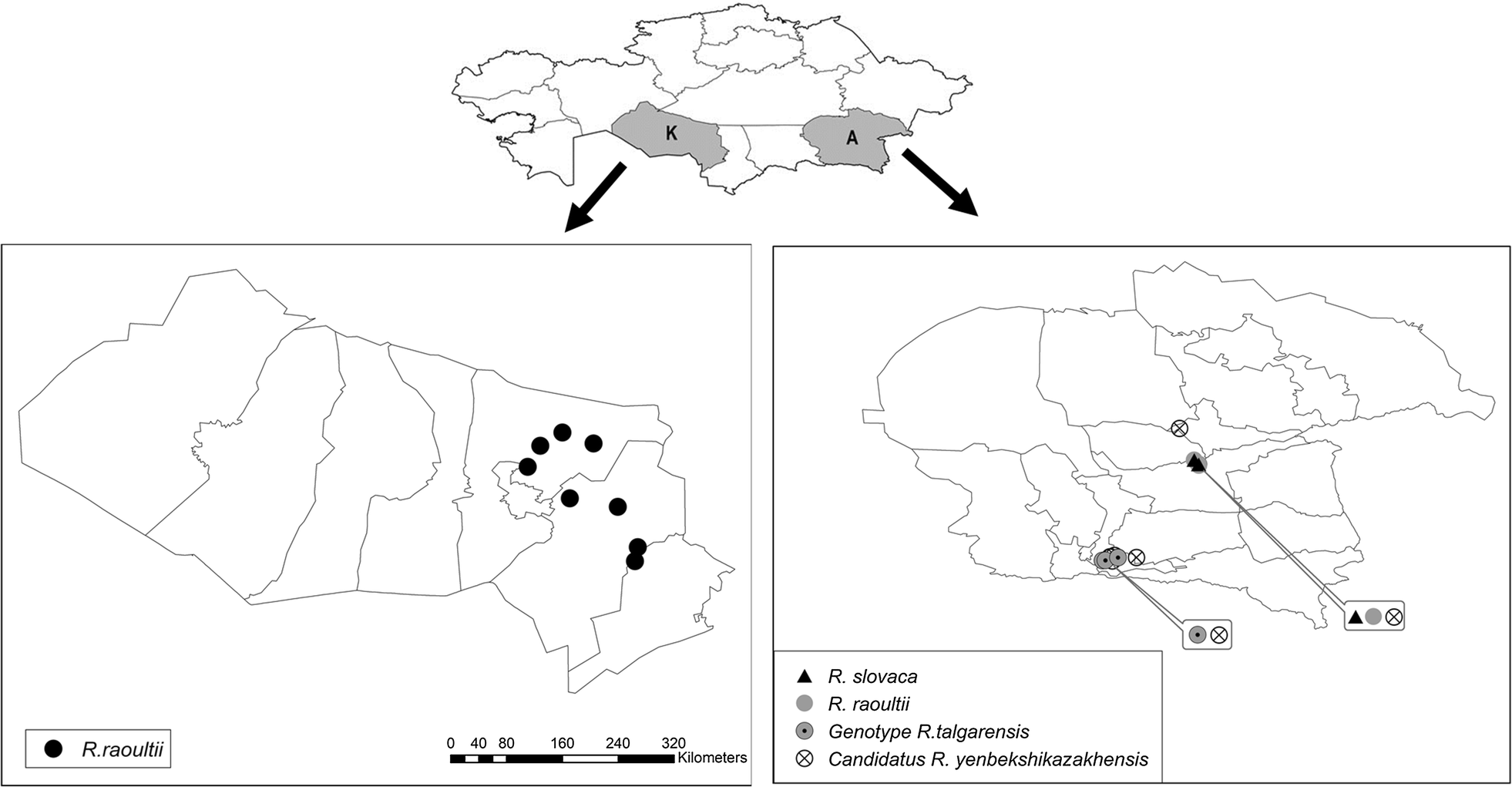 Prevalence of Rickettsia species in ticks including ...