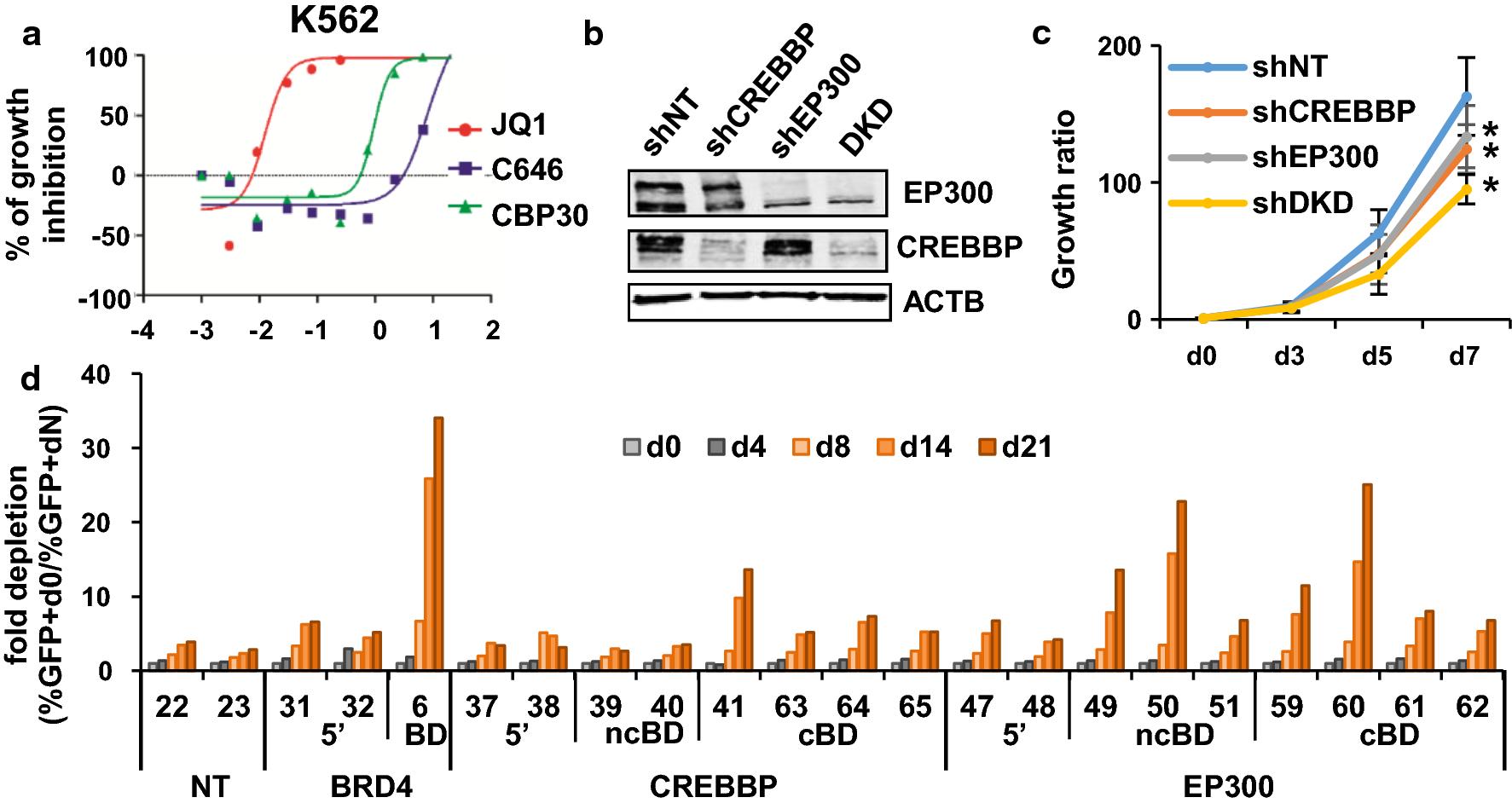 Crebbp Ep300 Bromodomains Are Critical To Sustain The Gata1 Myc Jacinto 5 Block Diagram Fig 1