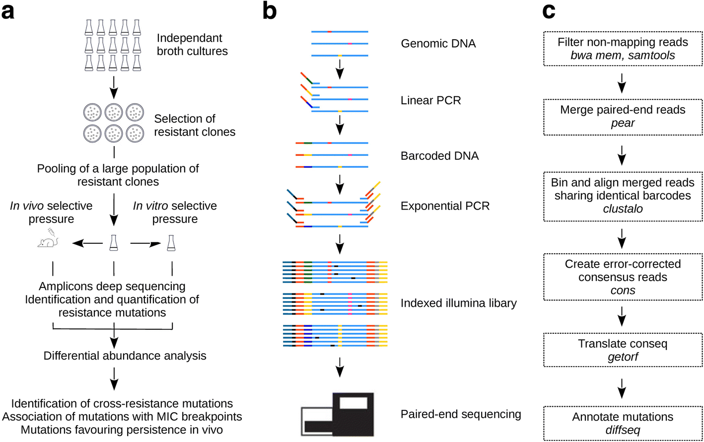 Comprehensive Antibiotic Linked Mutation Assessment By Resistance Molecular Expressions Electricity And Magnetism Fig 1