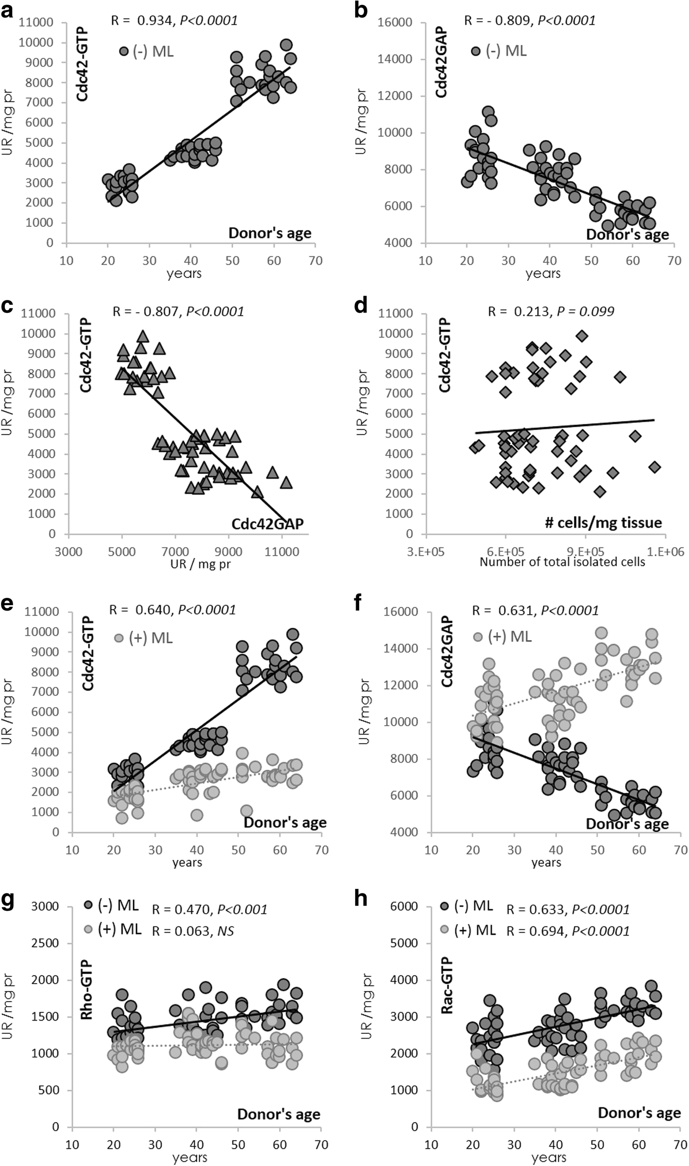 Inhibition of the RhoGTPase Cdc42 by ML141 enhances hepatocyte ...