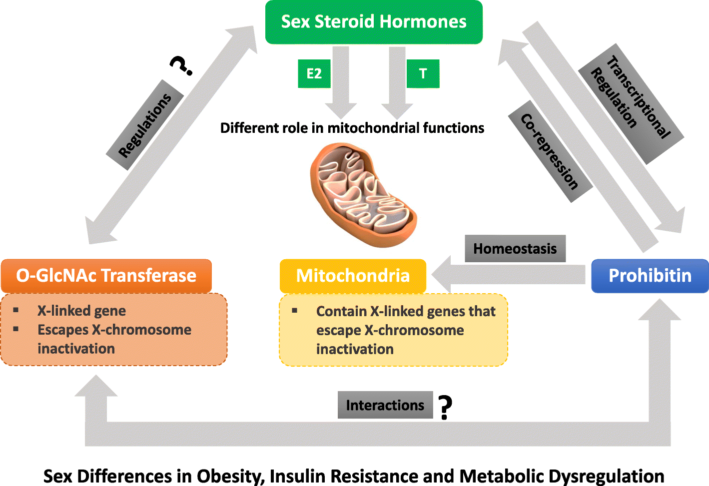 Steroids insulin resistance british dragon labs dbol