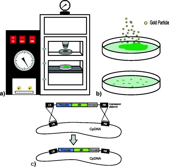 Production Of Therapeutic Proteins In The Chloroplast Of