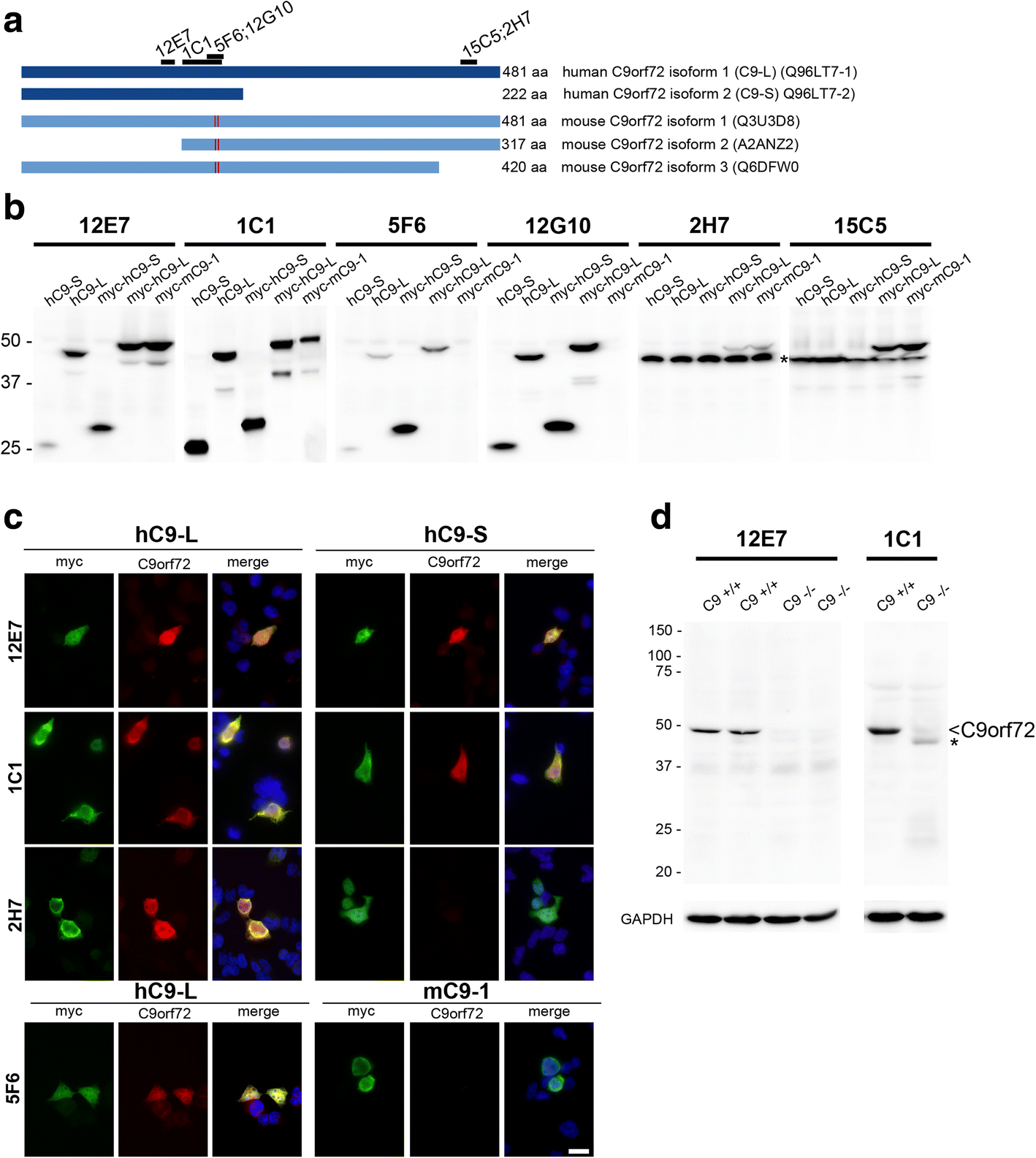 Novel Antibodies Reveal Presynaptic Localization Of C9orf72 Protein How To Protect A Reed Switch From Specific Loads Cynergy 3 Fig 1