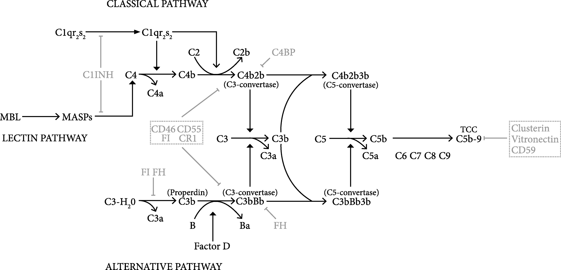 The Complement System In Glioblastoma Multiforme Acta 2 S Circuit Diagram Fig 1 Schematic And Simplified Representation Of