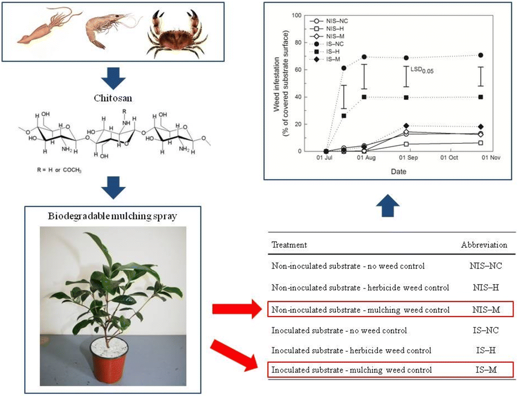 Experimental Biodegradable Traffic >> Biodegradable Mulching Spray For Weed Control In The Cultivation Of