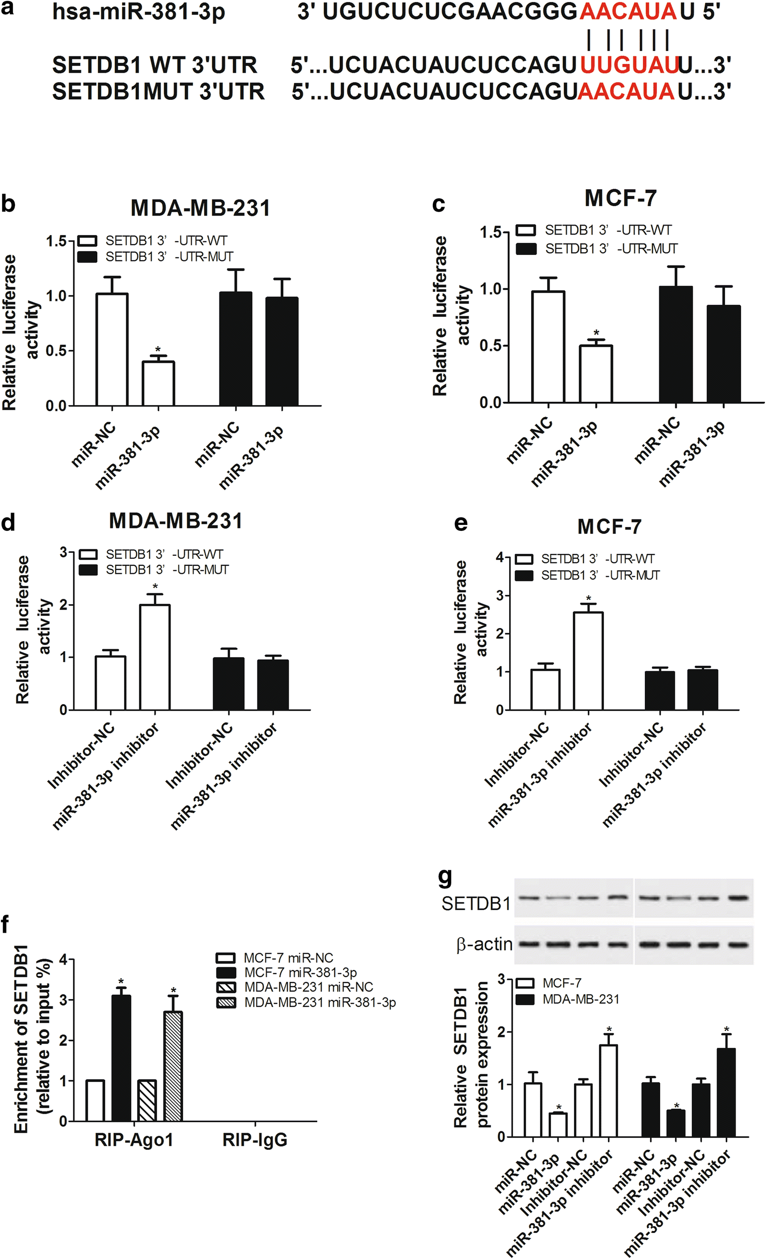 Knockdown Of Setdb1 Inhibits Breast Cancer Progression By Mir 381 3p Counter Using 7 Segment Display Public Circuit Online Fig 4
