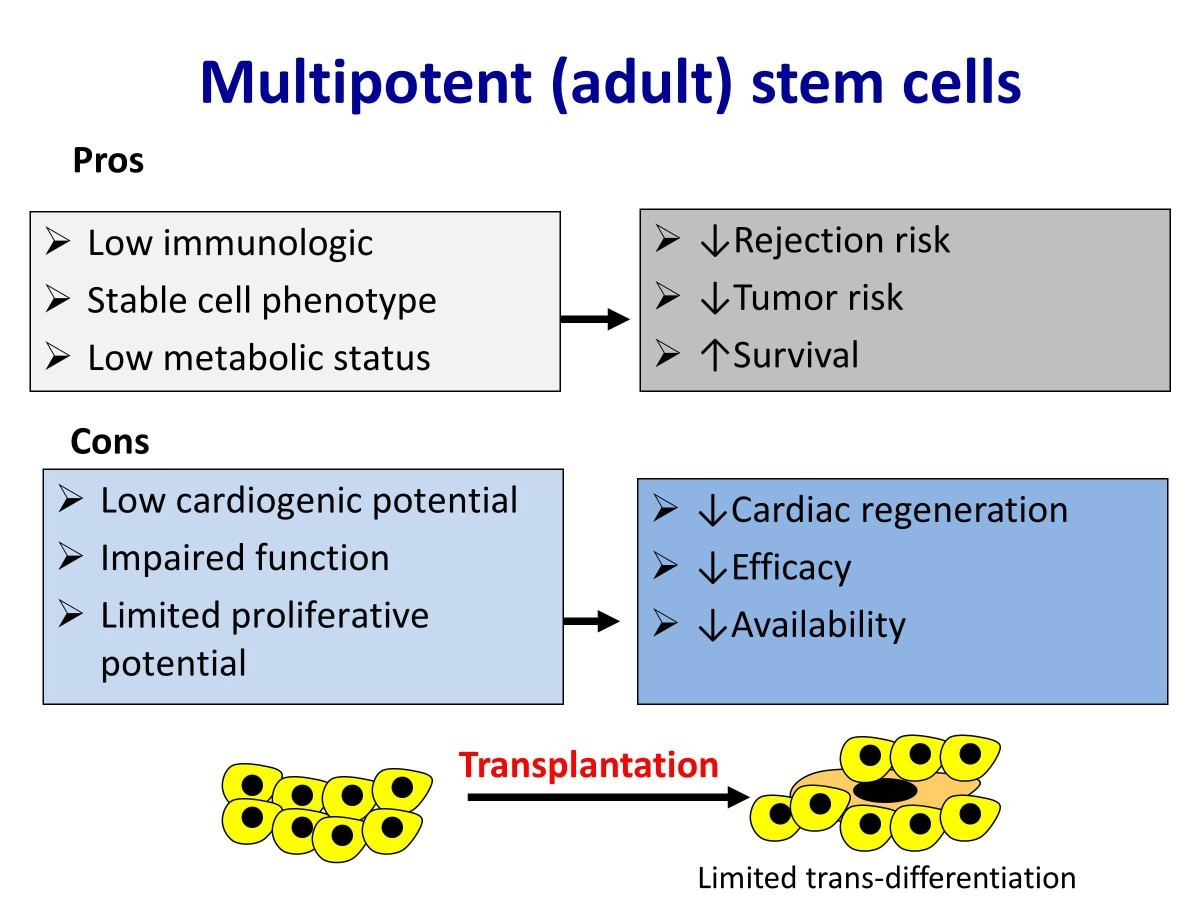 potential of adult stem cells Tsz kin ng, daniel pelaez, veronica r fortino, jordan greenberg and herman s cheung (august 28th 2013) pluripotent adult stem cells: a potential revolution in.