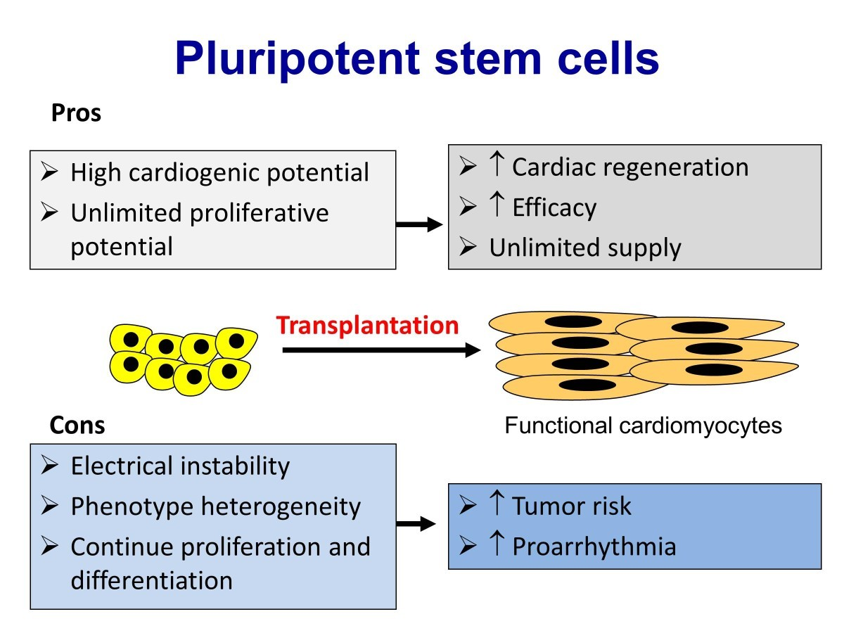 stem cell research pros and cons pdf